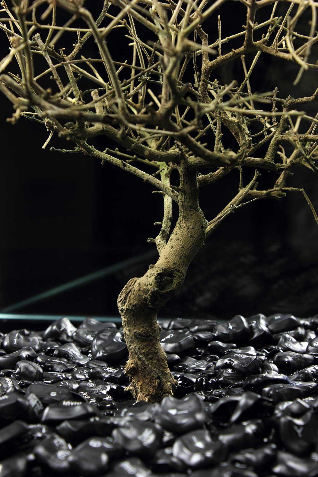 detail artwork bonsai - keyboard buttons created by meimorettini duo italian artists
