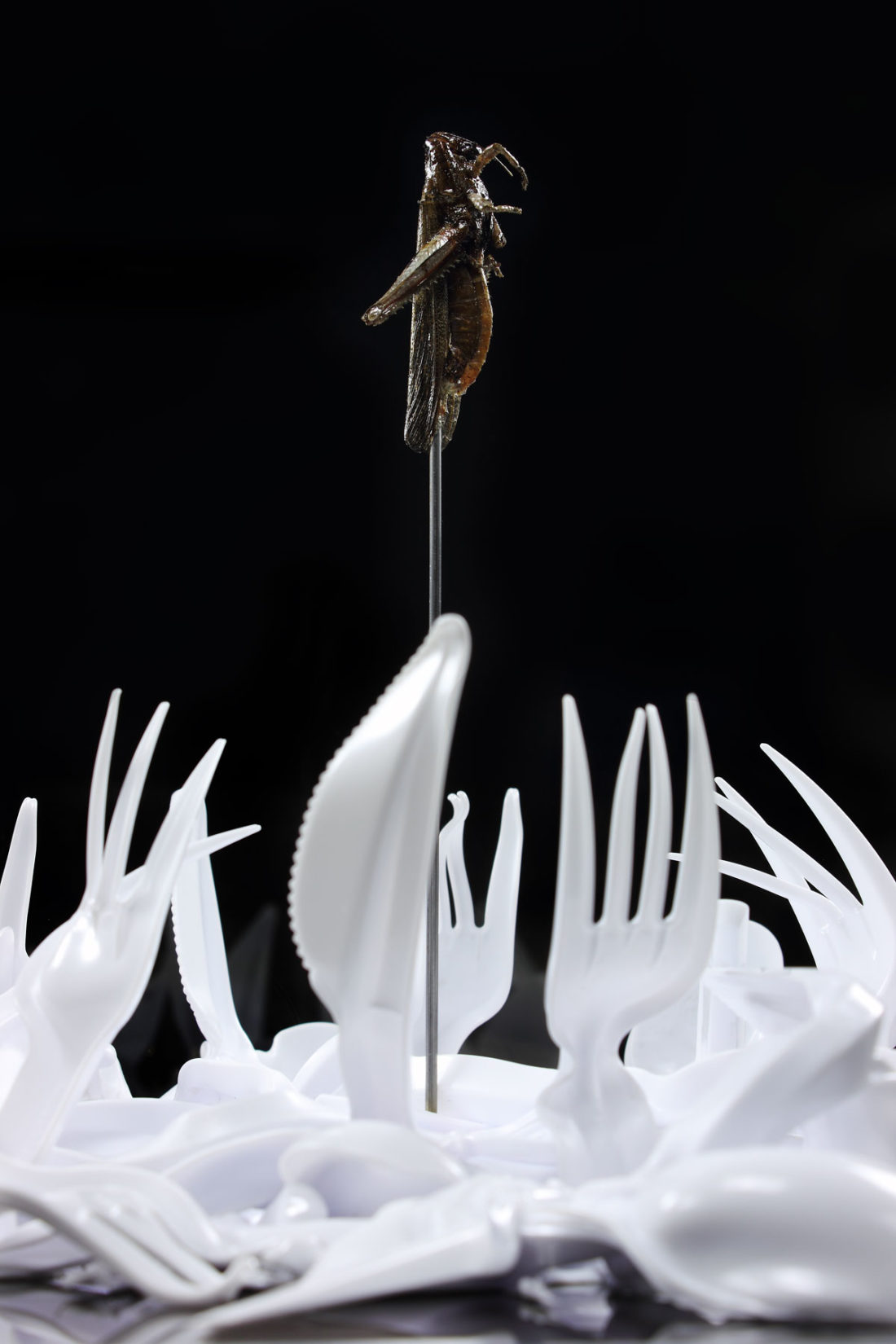 detail artwork locust - plastic cutlery created by meimorettini duo italian artists