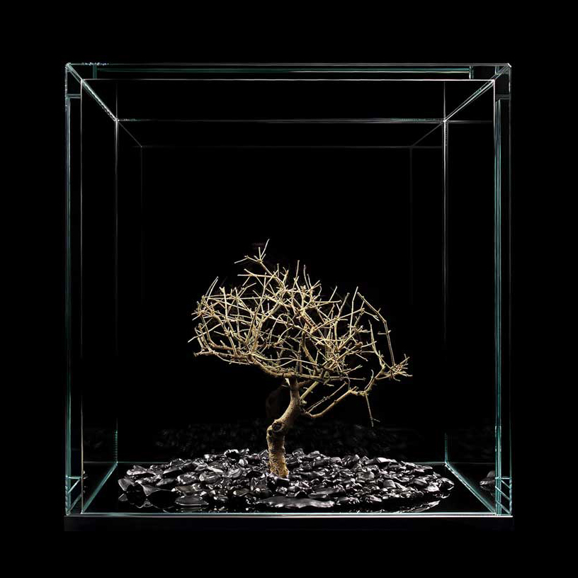 bonsai-keyboard-buttons-meimorettini-artwork-artists